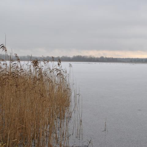 Vue de l'étang du Bas en hiver - RNR des étangs de Belval-en-Argonne