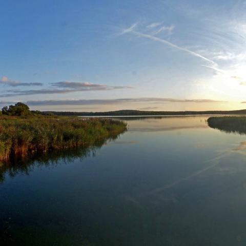 Vue de l'étang du Bas 2 - RNR des étangs de Belval-en-Argonne