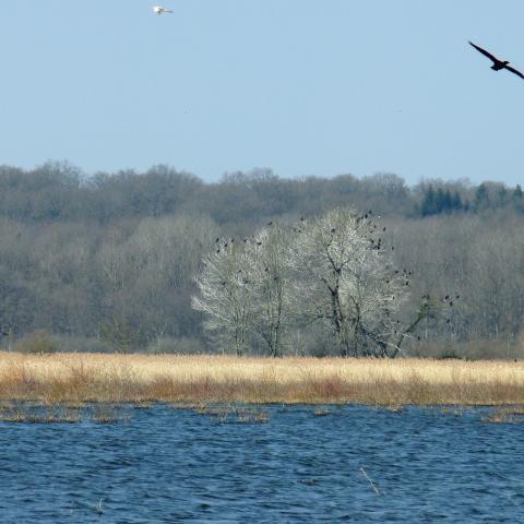 Vue de l'étang du Bas en hiver 2 - RNR des étangs de Belval-en-Argonne