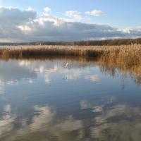 Vue de l'étang du Bas - RNR des étangs de Belval-en-Argonne